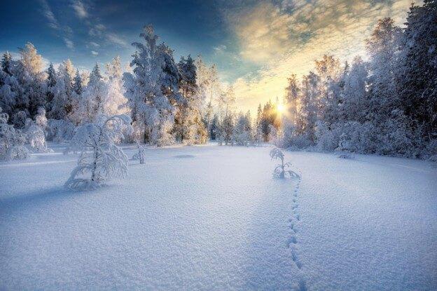 Сколько дней до зимних каникул